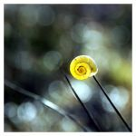 Snail shell in the sun square by MacsBlack
