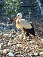 Stork by Despina33