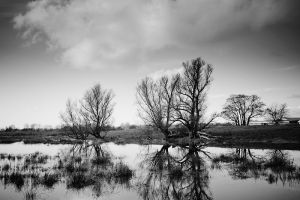 Trees by the Pond by Freggoboy