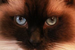 Cat's eyes by ArianeCreations