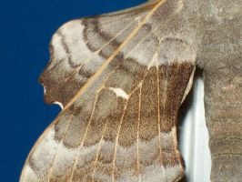 Patterns In the Wing by Pho-TasticMathew