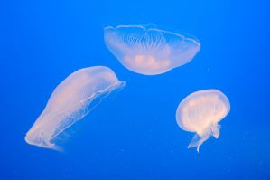 Stock 461 - Jellyfish by pink-stock