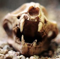 Skull by FSGPhotography