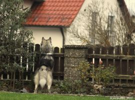 watching the neighbours by RachaelXIII