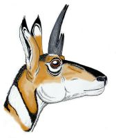 Pleistocene drawf prongHorn 1 by Desertsabertooth
