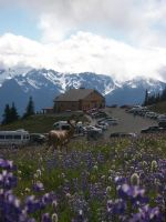Welcome to Hurricane Ridge by pokemontrainerjay