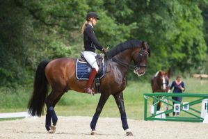 Lusitano Collected Walk Stock by LuDa-Stock