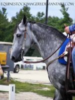 Tennessee Walking Horse 4 by EquineStockImagery