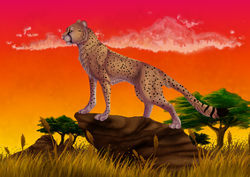 Cheetah by Chrystal-Art