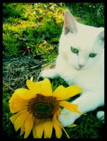 Lily and Sunflower by JupiterLily
