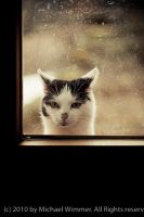 Not a window licker by flaimo