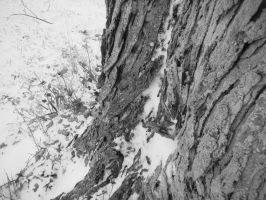 Tree Trunk in Snow by Rthecreator