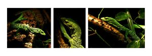 Lizard Triptych by seeing-the-dark