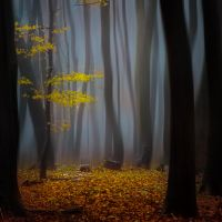 -Timeless- by Janek-Sedlar
