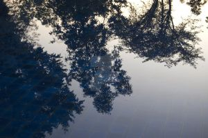 pool tree reflection by itswhyte