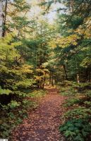 Path of Leaves by Amberwood
