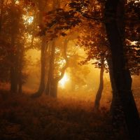 -Ancestor of recall- by Janek-Sedlar