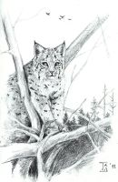 Bobcat by TS-cat