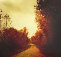 yellow path by victoriaaudouard