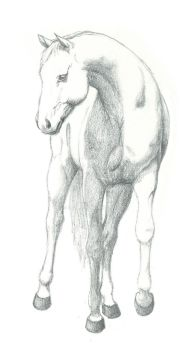 White Horse by Caalih