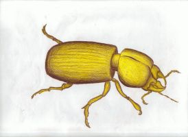 Red-Yellow Beetle by JayGulty