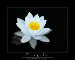 Fragile by chinesestunna