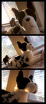 Douglas Major Great Dane - Golden Afternoon by The-Toy-Chest
