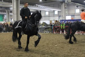 Friesian-Verona 2012 (2) by xXRei-kunXx