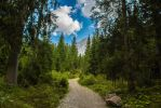 The Path by Adres89