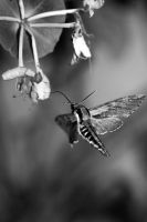 Moth in action by Gothicpagan