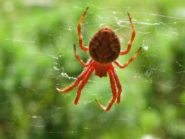Spider in web series two 06 by teletran