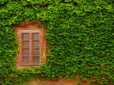 Wall of green and window by CultureQuest