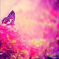 the butterflies breath by el-desant