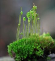 A Touch Of Moss 3 by Firey-Sunset