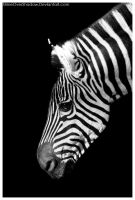 Black and White - Stripes by ShineOverShadow