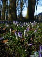 Pale Spring Shoots by Blue-eyed-Kelpie