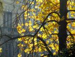 leafs by Itapao