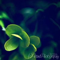 Green Bush by NanaPHOTOGRAPHY