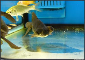 Fish Stock 0075 by phantompanther-stock