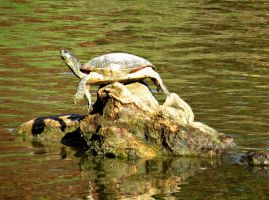 Balanced Turtle by Michies-Photographyy