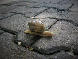 Another Snail Again by Betysch