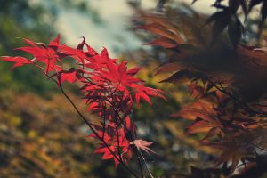 Shades of Autumn by bslag