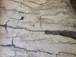 Wood Cracks by dazzle-textures