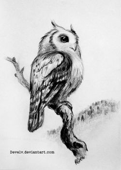 Owl by Develv