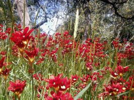 red wild fowers by herio
