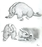 Badgermole sketches by Porcubird