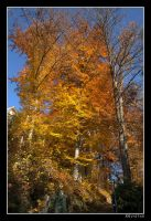 Tree colors by RRVISTAS