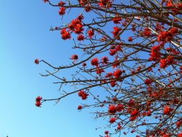 Blue sky Red flowers. by mayas15