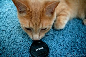 Pentax Cat by ElaineSelene