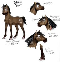 Sham Character Sheet by agra19